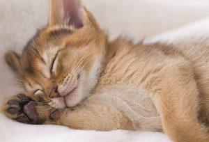 5 Rekomendasi Obat Kucing Flu Di Apotik Hewan Paling Ampuh